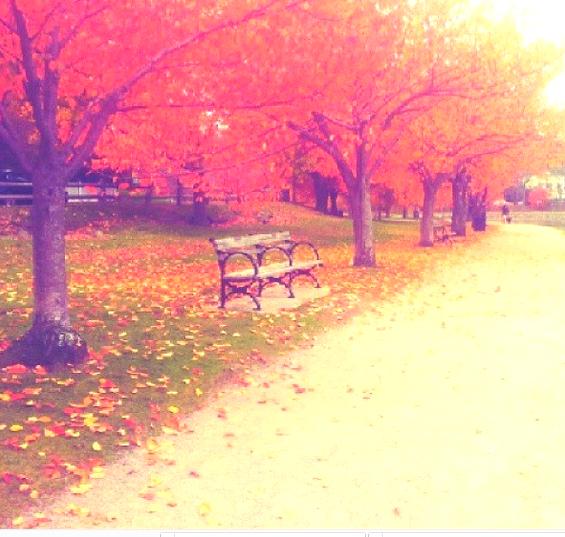 שביל יפה בבוסטון